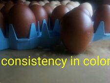 ****HUGE SALE**** 6 CBF French Copper Marans BBS Fertile Eggs NATURALLY DARK****