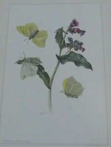 Objet-scolaire-planche-insecte-N-149-CITRON