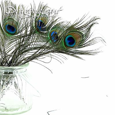 Pack of 10 Peacock Feathers Variable Length Millinery Wedding Invitation Craft