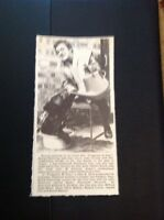 72-4 Ephemera 1969 Picture David Hemmings Fragment Of Fear With Bear Cub