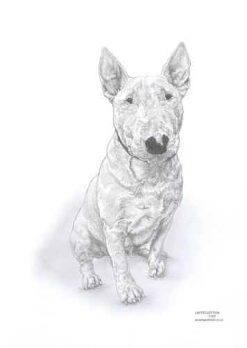 BULL TERRIER dog Ltd Edit art drawing print 2 sizes A4//A3 /& note card available