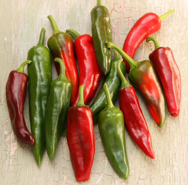 Hot Pepper - Big Jim - Appx 100 seeds - Vegetable