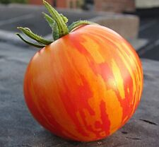 Seeds vegetable organic heirloom Tomato Tigrella from Ukraine