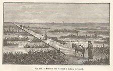 A4976 Pianura vicino Valmiera - Xilografia - Stampa Antica del 1895 - Engraving