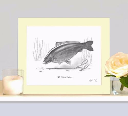 THE BLACK MIRROR Classic Legendary Carp Fishing Drawing Print Picture MOUNTED
