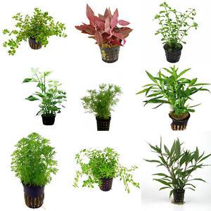 Assortment Nr 2 Aquatic Terrarium Plants 54 Pots Ebay
