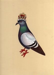 Hand-Painted-Indian-Bird-Painting-Pigeon-Message-Commander-Miniature-Wildlife