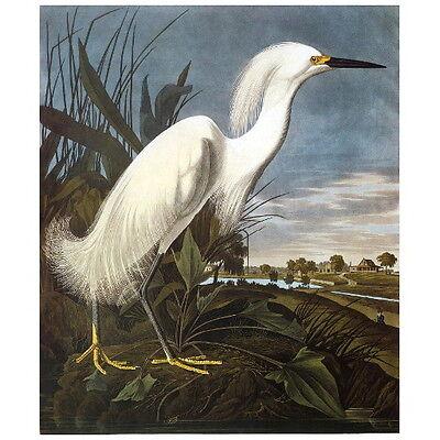 John J Audubon American White Pelican Deco Magnet Birds of America Mini Gift