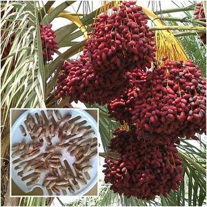 oslo thai massasje dates fruit