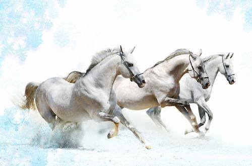 Horses animals sticker ref 105