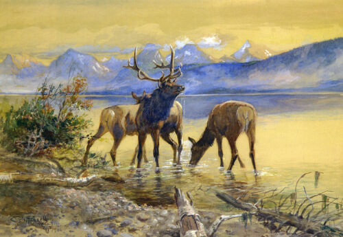 Elk in Lake McDonald  by Charles Russell   Paper Print Repro