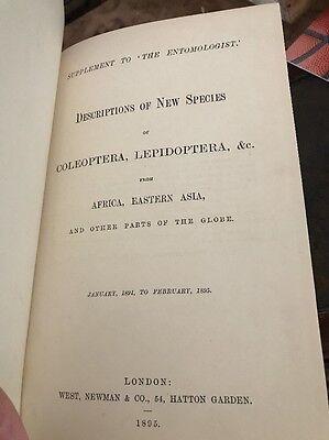 Entomology~Lepidoptera~Coleoptera~1895~New Species