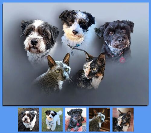 Cat Dog Horse Head//Shoulders Pet Portraits From Your Own Photos On Box Canvas