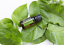 New-doTERRA-Tea-Tree-15ml-Therapeutic-Grade-Pure-Essential-Oil-Aromatherapy