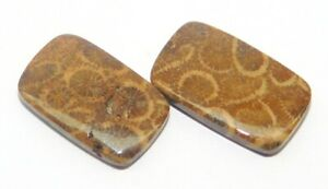 Designer Fossil Coral Cabochon Pair For Earring Making Gemstone Exclusive Fossil Coral Cabochon Pair Loose Gemstone ZS 7259