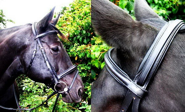 Fss alemán proyecto Flash Caveson confort Doma Bridle Big Hunter Clydesdale so