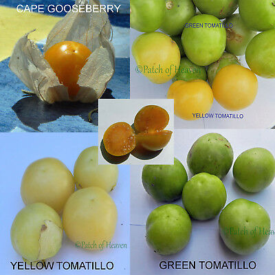 Physalis Ixocarpa Tomatillo Miltomate 200 Seeds Seeds Vegetable Garden Garden