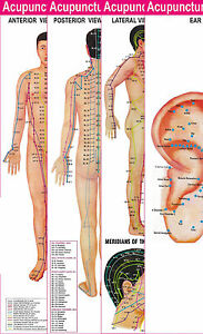 Natural & Alternative Remedies Atlas Of Sujok Acupuncture Hand Book By Acs Acupuncture Free 5 Sujok Rings