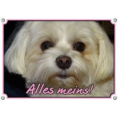 100% QualitäT Hundeschild Malteser - Top Metallschild Vom Comforter Oder Bichon Malteser Mit Einem LangjäHrigen Ruf