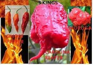 COMBO-PACK-Ghost-pepper-Carolina-Reaper-Trinidad-Moruga-Scorpion-Hot-chili-seeds
