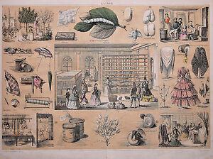 Le Prix Le Moins Cher La Soie -planche Scolaire 30 X 40 Cm. Vers 1850 - Lithographie