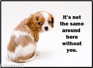 Dog Humor It/'s Not The Same Around Here Without You Refrigerator Magnet