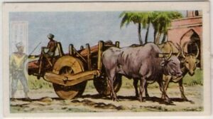 Ox-Cart-Used-As-Transport-India-China-Vintage-Ad-Card