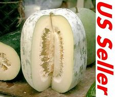 20 PCS Seeds of WAX GOURD Winter Melon E63, White Ash Benincasa Hispida Seeds