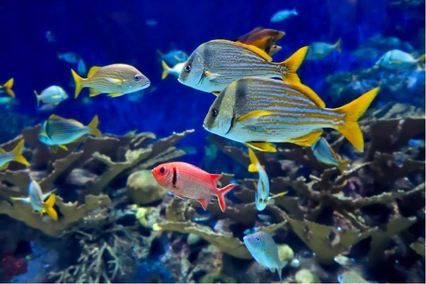 Plakat Plakat Wanddekor Fische Ref 18725167 (6 Größe)