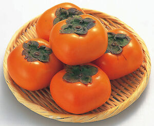 Melon CANTALOUPE Naranja MUY DULCE 1000 Semillas seeds