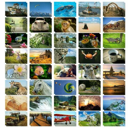 40 Pack Postcards New Assorted Variety Pack Set Animals Landscapes Photographs
