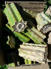 12 lbs+ of San Pedro Trichocereus cuttings