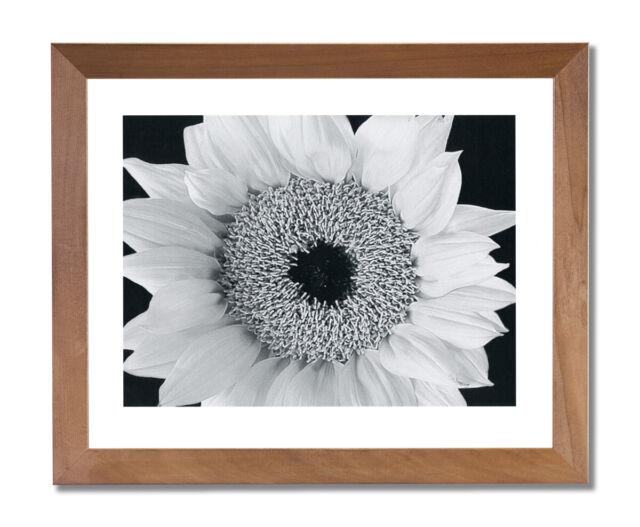Yellow Sunflower B/W Photo Wall Picture Honey Framed Art ...