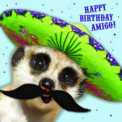 Meerkat Birthday Card Happy Birthday Amigo Funny Meerkats Greeting