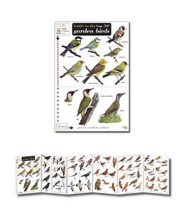 Image Is Loading Field Guide To The Top 50 Garden Birds