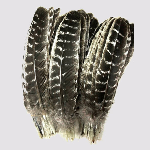 Wholesale Natural Turkey Tail Feather 10-16 inches//25-40cm Crafts Decoration