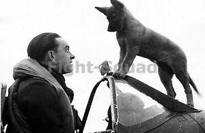WW2 Photo RAF Spitfire pilot and his dog 587