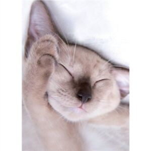 Cats-Protection-6-mini-note-cards-Kitten-Cuddles-white-sleeping-cat-Charity