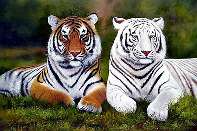 Stunning art Oil painting wildlife animals yellow and white tigers canvas 36""