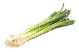 SHALLOT-039-Bunching-039-150-vegetable-seeds-onion-garden-EASY-TO-GROW-winter-veggie