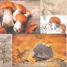 3 TOVAGLIOLI TOVAGLIOLI autunno RICCIO FOGLIE pietra fungo funghi di bosco #272