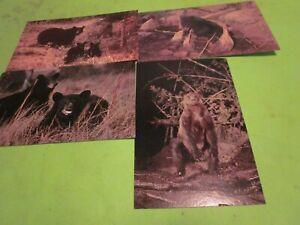 4-Vintage-Unused-Black-Bear-Postcards