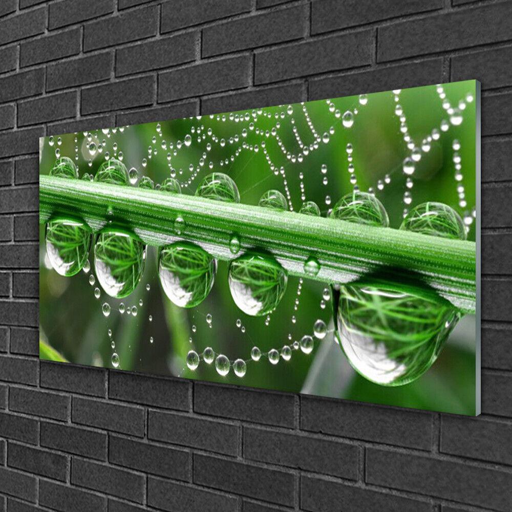 Tableau sur verre Image Impression 100x50 Toile D'araignée Goutte De Rosée
