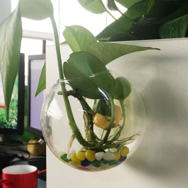 Extra Large 30cm Clear Glass Terrarium Ball Vase Bottle Fish Bowl