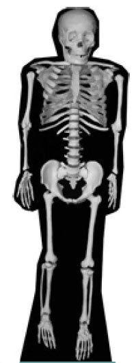 Skelett (Halloween) Lebensechte Größe Pappfigur