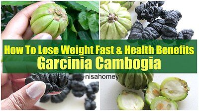 garcinia cambogia grafted trees for sale