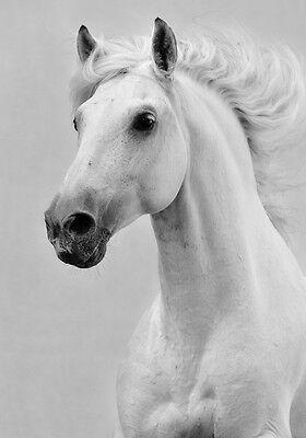 Horse Beautiful Black White Quality Art Canvas Print A4 Ebay