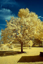 Sony Alpha 7R A7R ILCE-7R 590nm Super Color IR Infrared converted camera