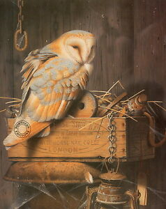 George-Pickering-PRINT-Barn-Owl-Bird-Of-Prey-Art-like-Harry-Potter-Hedwig