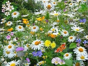 NATURE-LANDSCAPE-FLOWER-BUTTERFLY-GARDEN-BEAUTIFUL-COOL-POSTER-ART-PRINT-BB1432B